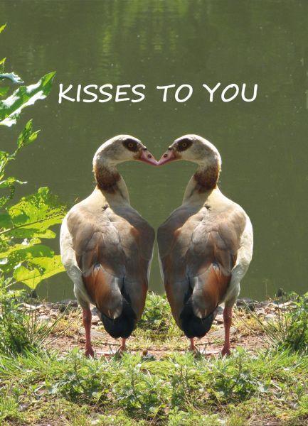"""Postkarte mit Text """"Kisses to you"""" Entenpaar"""